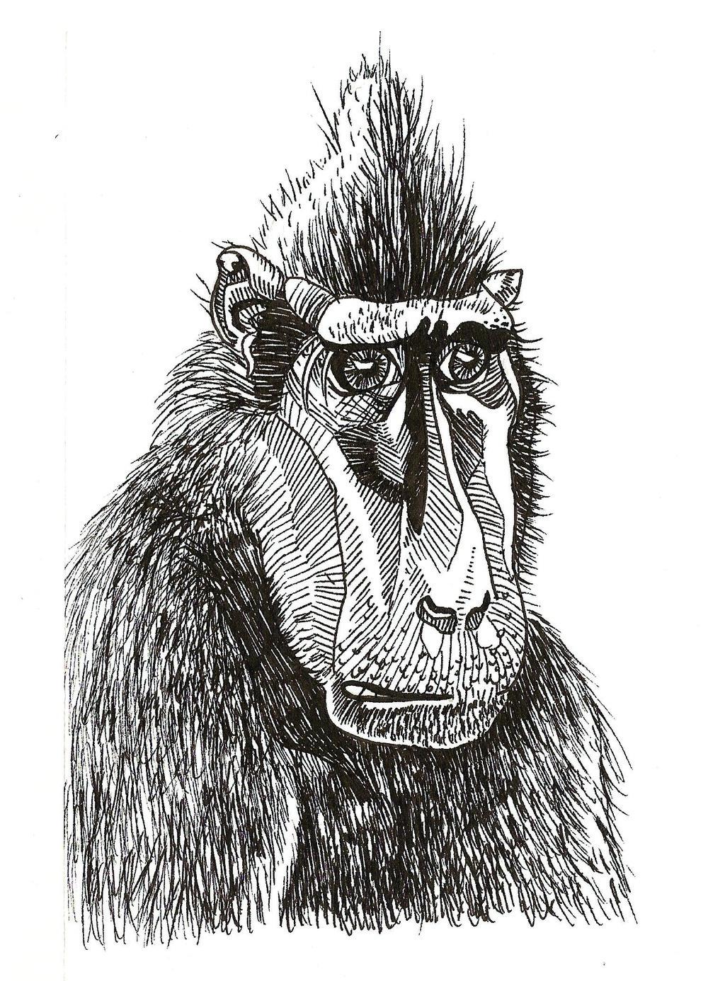 Monkey    H U M A N  A N C E S T O R