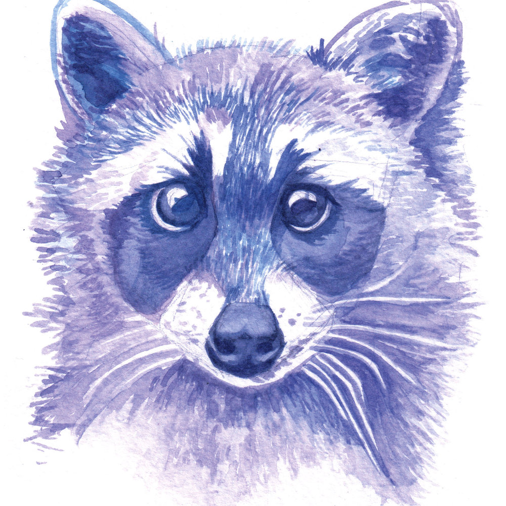 """Blue Raccoon""      Watercolor on Paper"