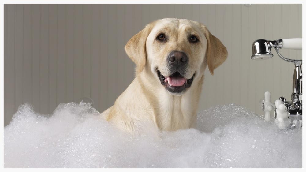 Dog bath02.jpg