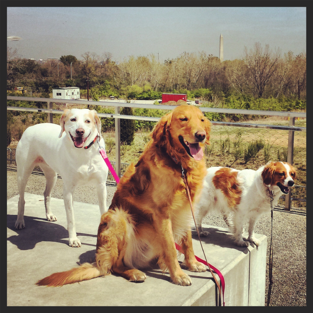 Our gang the other day at the park. Life is sooo good! :-)