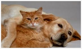 Norwex pets.jpg