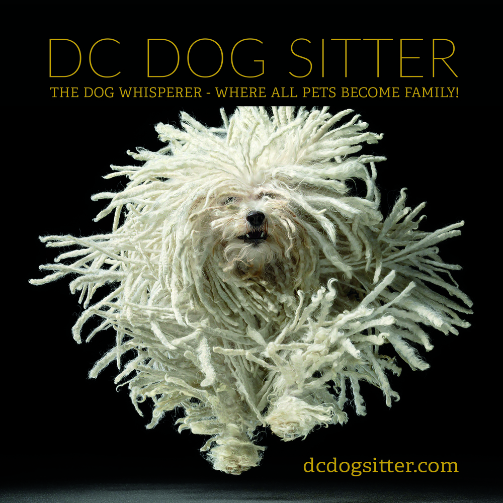 Postcard 5x5 rounded corners - DCDogSitter - FRONT.jpg