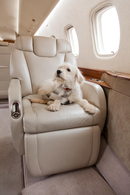 Dog on Private Jet01.jpg
