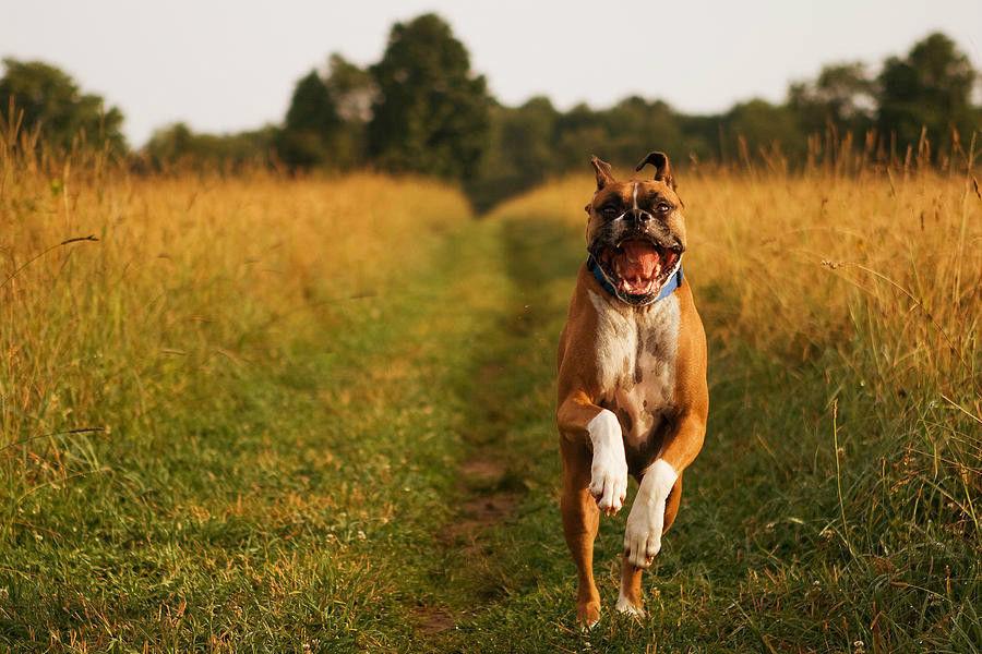 Dog Running01.JPG