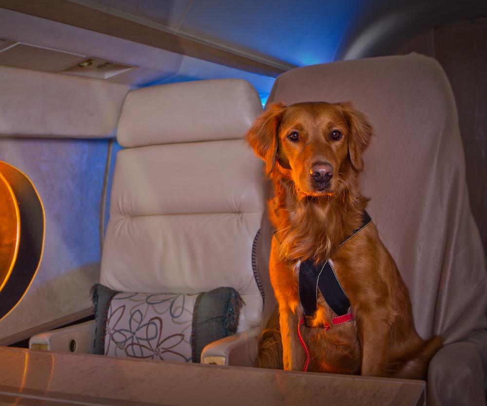 Dog on Private Jet02.jpg