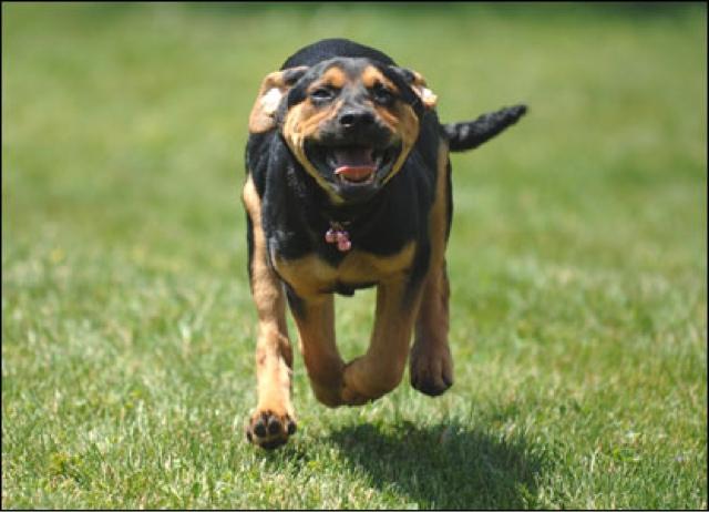 Dog Running06.jpg