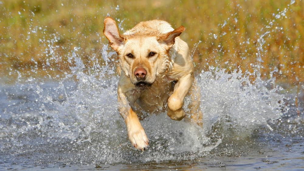 Dog Running02.jpg