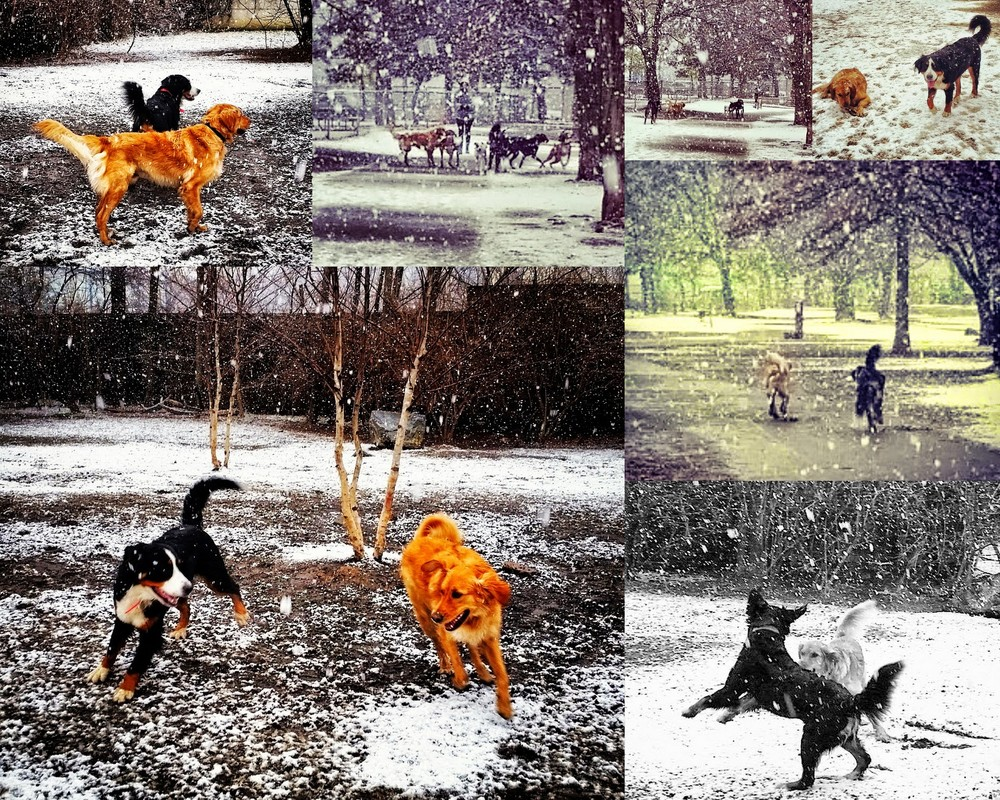 20150124 - Griffin and Marla Adventures in the Snow.jpg