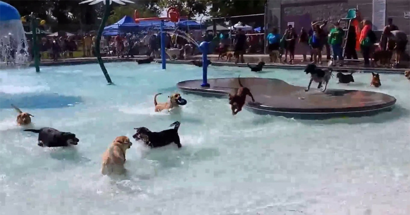 waterpark dogs 01.jpg