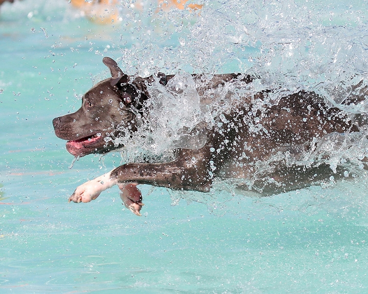 waterpark dogs 02.JPG