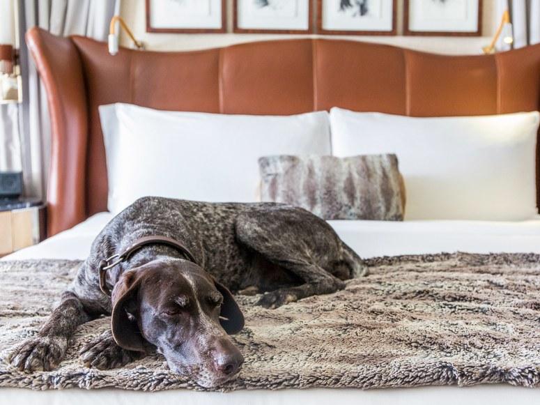 Hotel Pets23.jpg