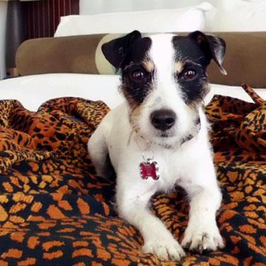 Hotel Pets21.jpg