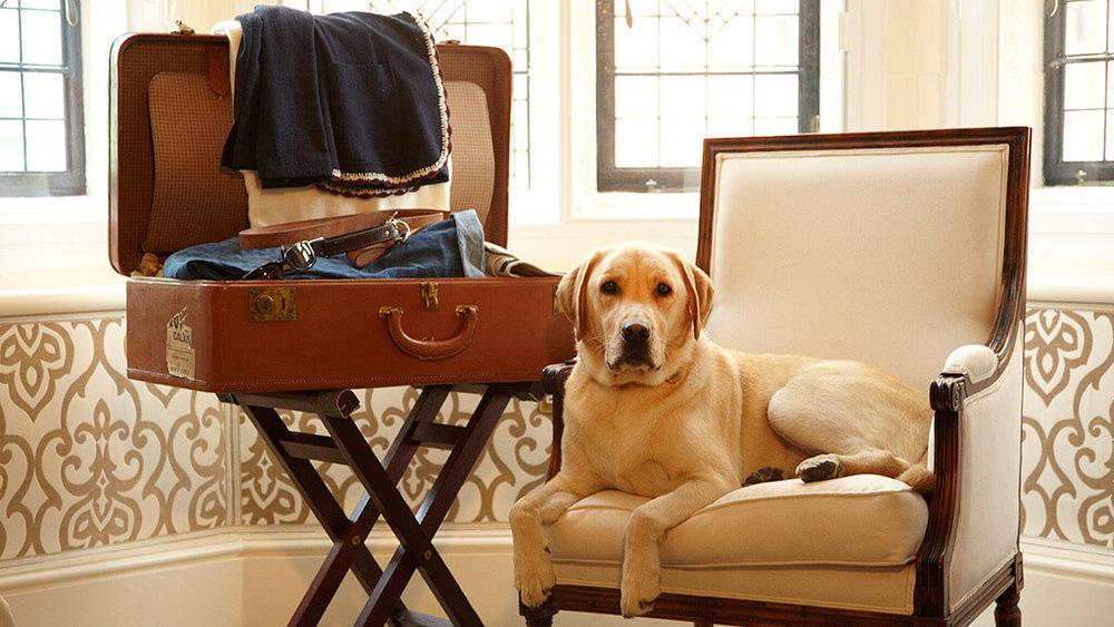 Hotel Pets 04.jpg