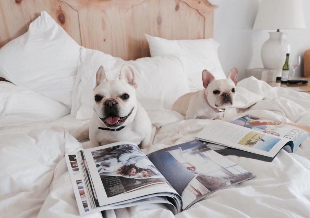 Hotel Pets14.jpg