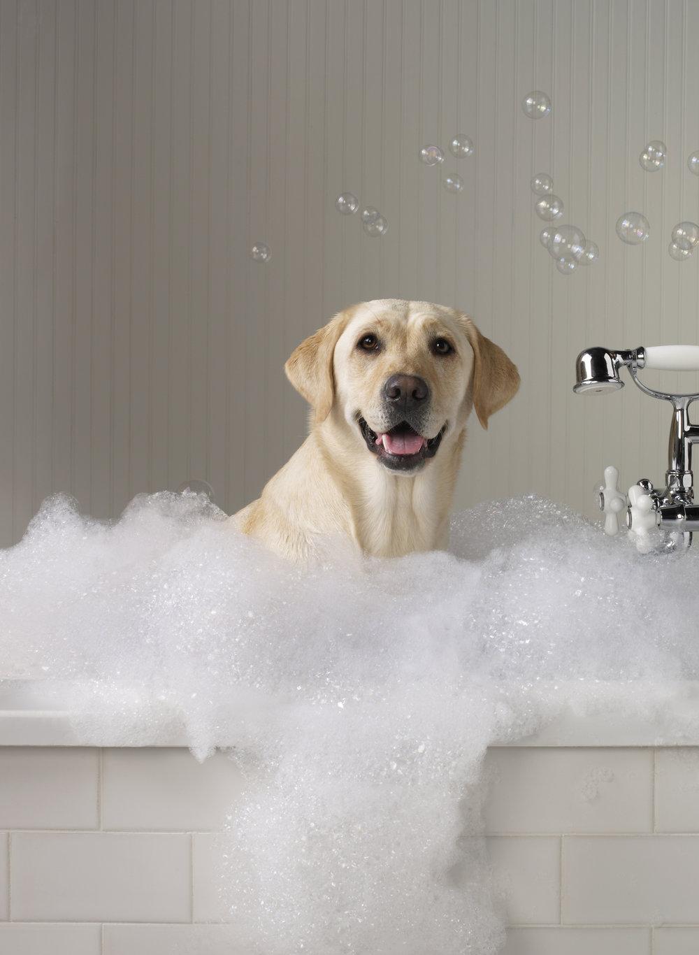 Spa Dog05.jpg
