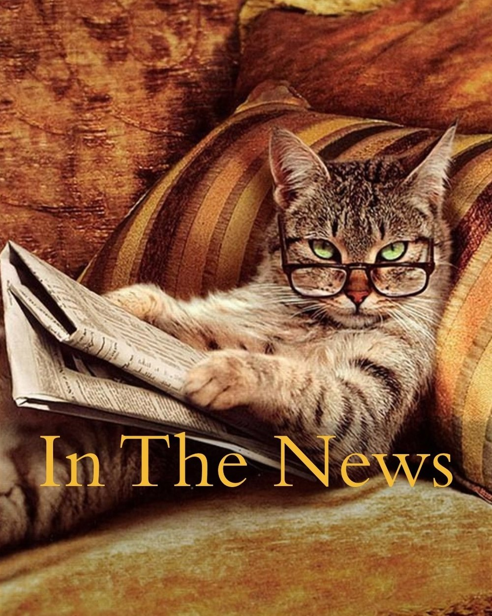 Cat+reading+newspaper