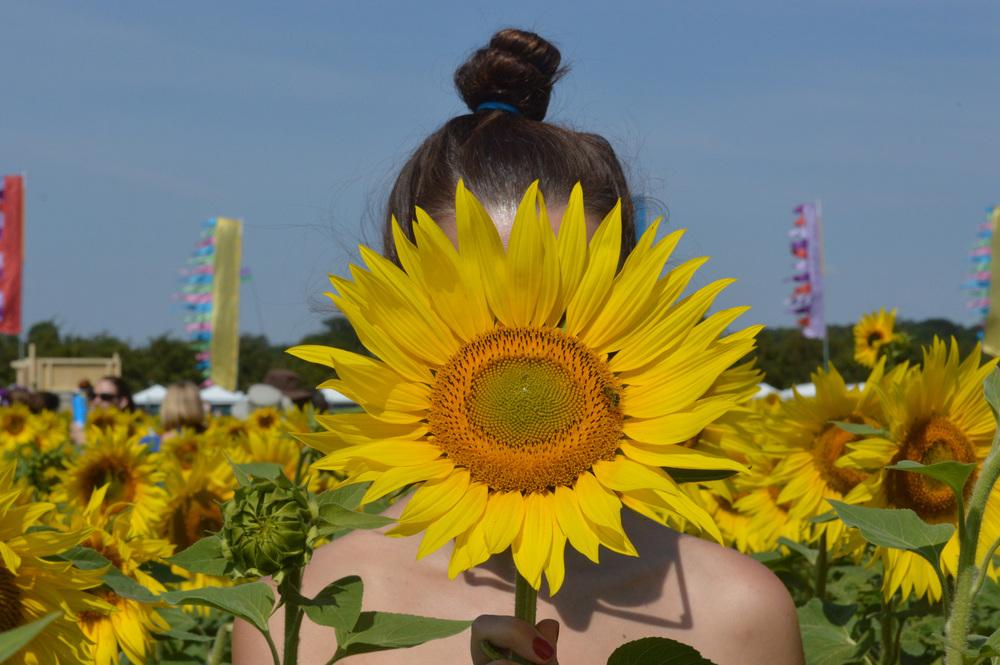 The secret sunflower field accessed through a secret portaloo. Yes... a portaloo.