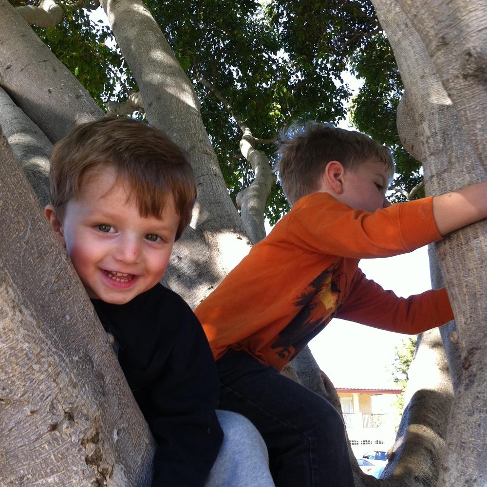 Abram tree.jpg