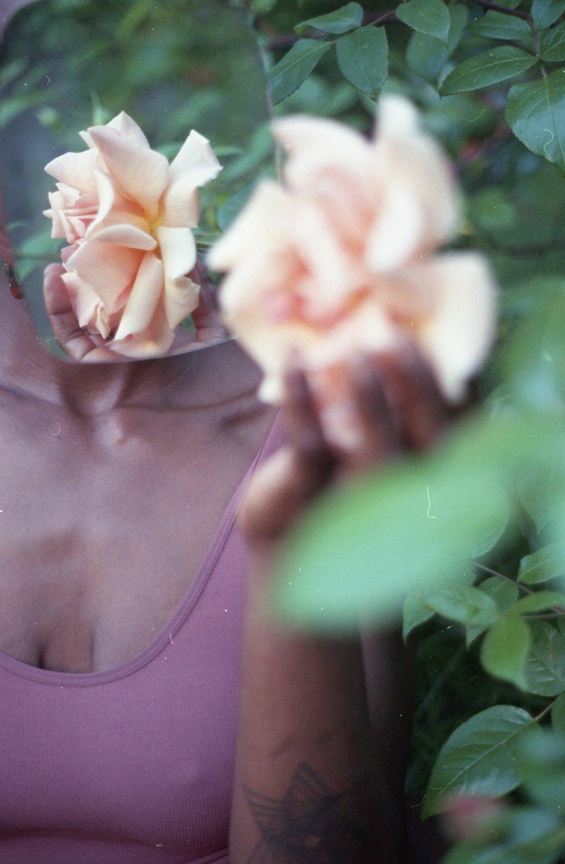 kimaya-roses015.jpg
