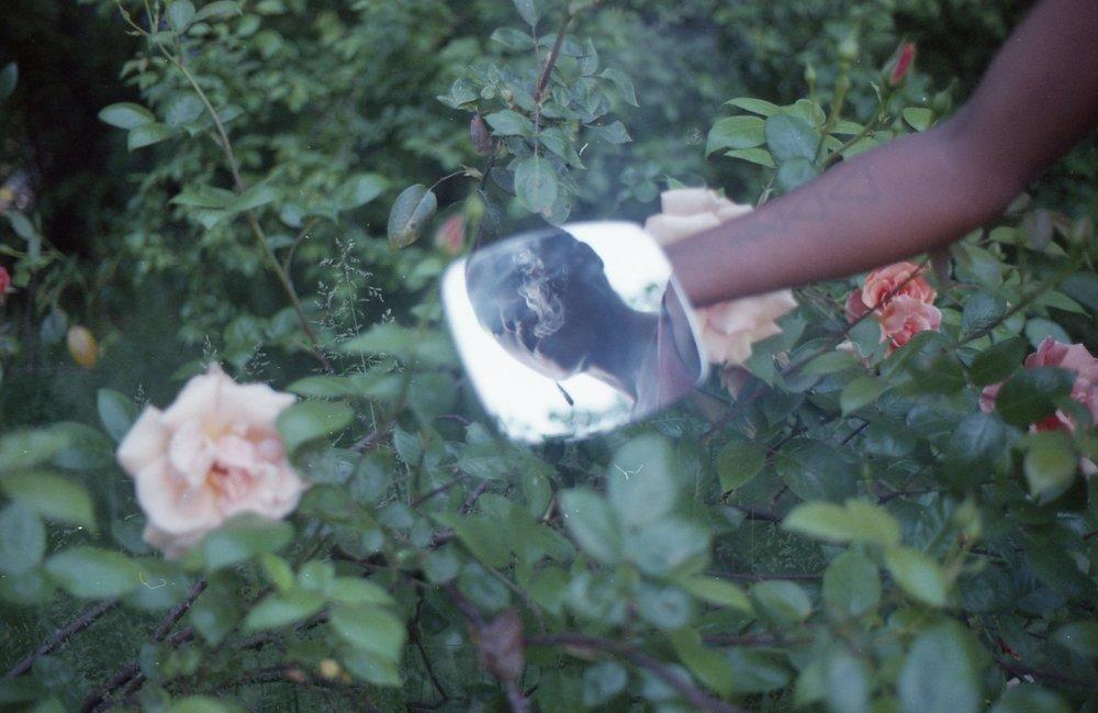 kimaya-roses016.jpg