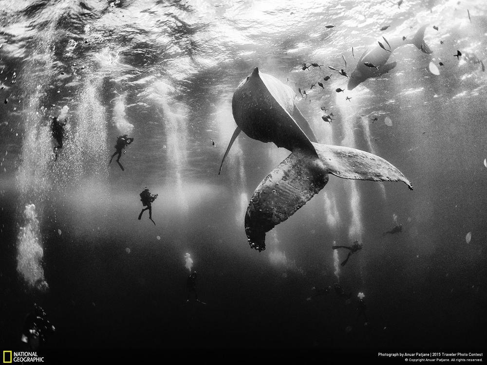 Whale Whispers (c) Anuar Patjane