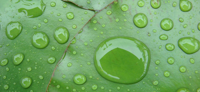 Water beads on a plant leaf