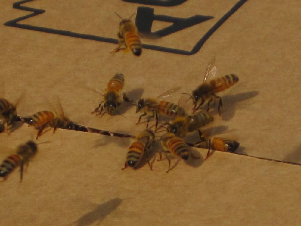 Bee4.jpg