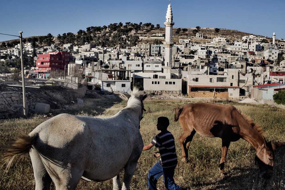 A Palestinian boy tends to horses in a field on the edge of Al-Arroub refugee camp in Hebron, West Bank, Palestinian Territories.