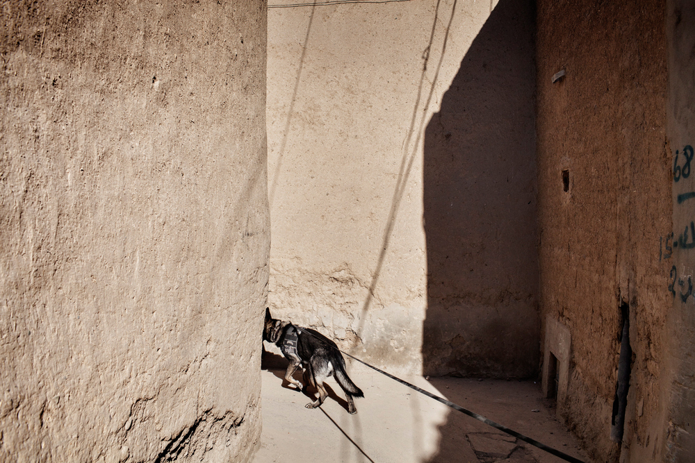Staff Sergeant Lance Oakes and Military Working Dog Jack, a German Shepherd patrol explosives dog, lead a patrol in Kandahar City, Afghanistan.