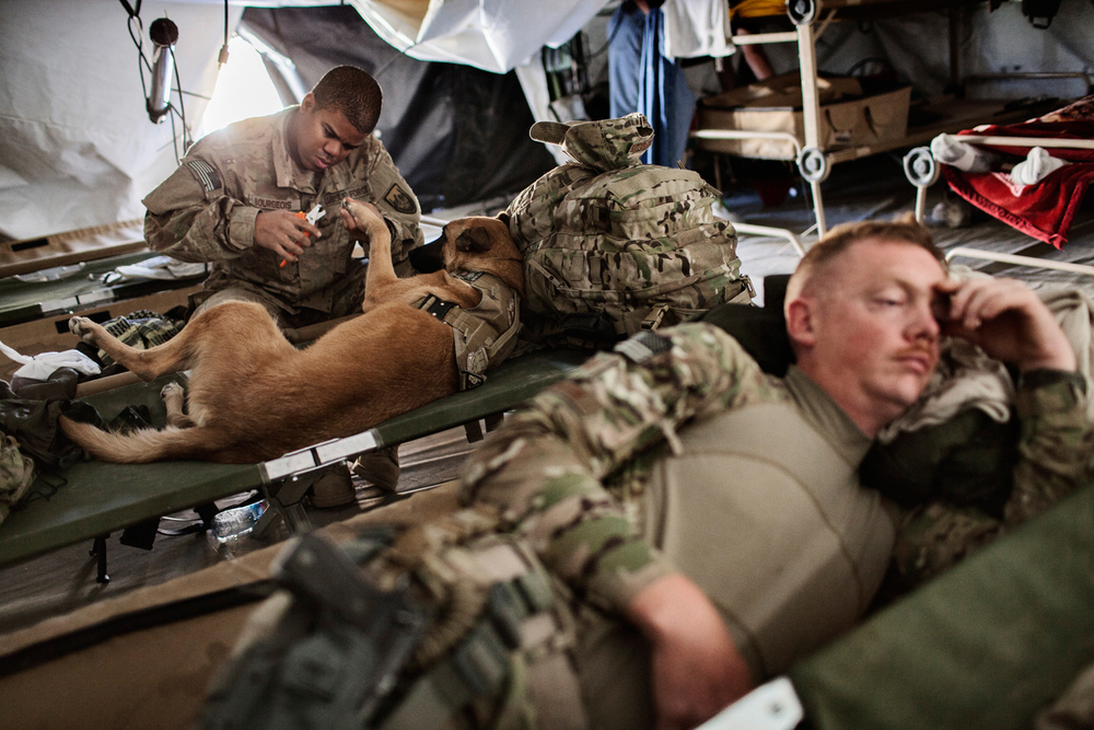 Military Working Dog handler Staff Sergeant Jonathan Bourgeois clips the toenails of his MWD Oopey, a Belgian Malinois patrol explosives dog, in preparation for an operation at Combat Operations Post Pacemaker, Kandahar, Afghanistan.