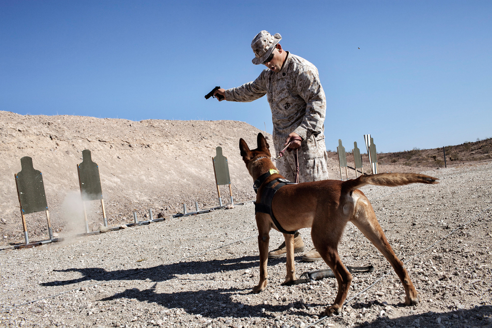U.S. Marine Gunnery Sergeant Kristopher Knight from the Military Police Instruction Company trains Military Working Dog Ronnie during an Inter-Service Advanced Skills Canine Training Course live fire exercise at Yuma Proving Ground, Arizona, U.S.A.