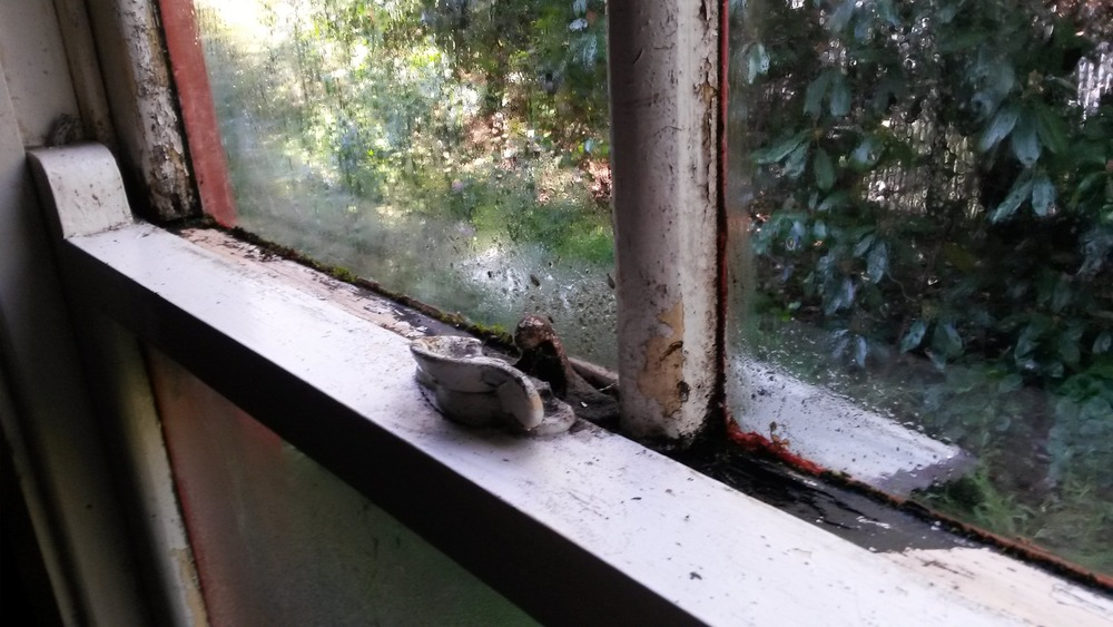 You could be forgiven for accepting the condition of this window due to its age, but nobody should have to live in a home where the condensation is so bad that the timber frames have rotted from the inside and black mould spores have made their home.