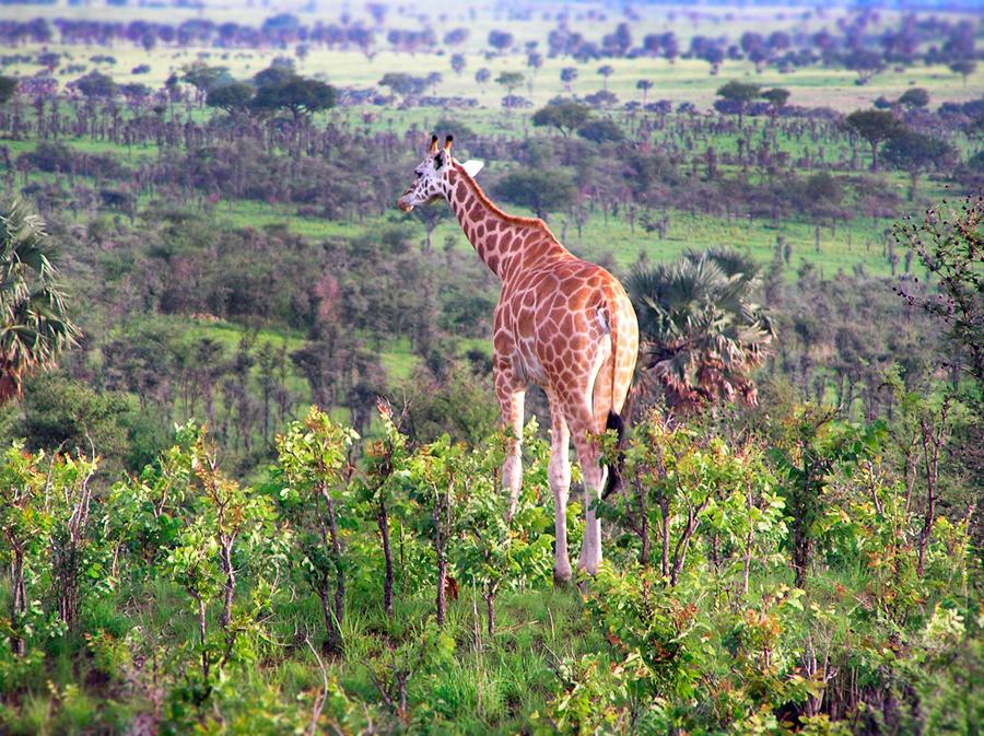 Northern Uganda, Eastern Africa