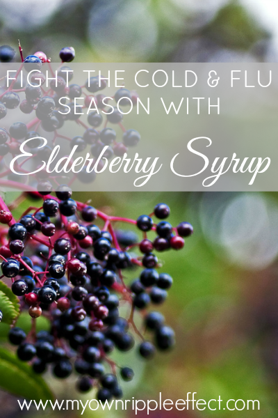 Elderberry Syrup 2