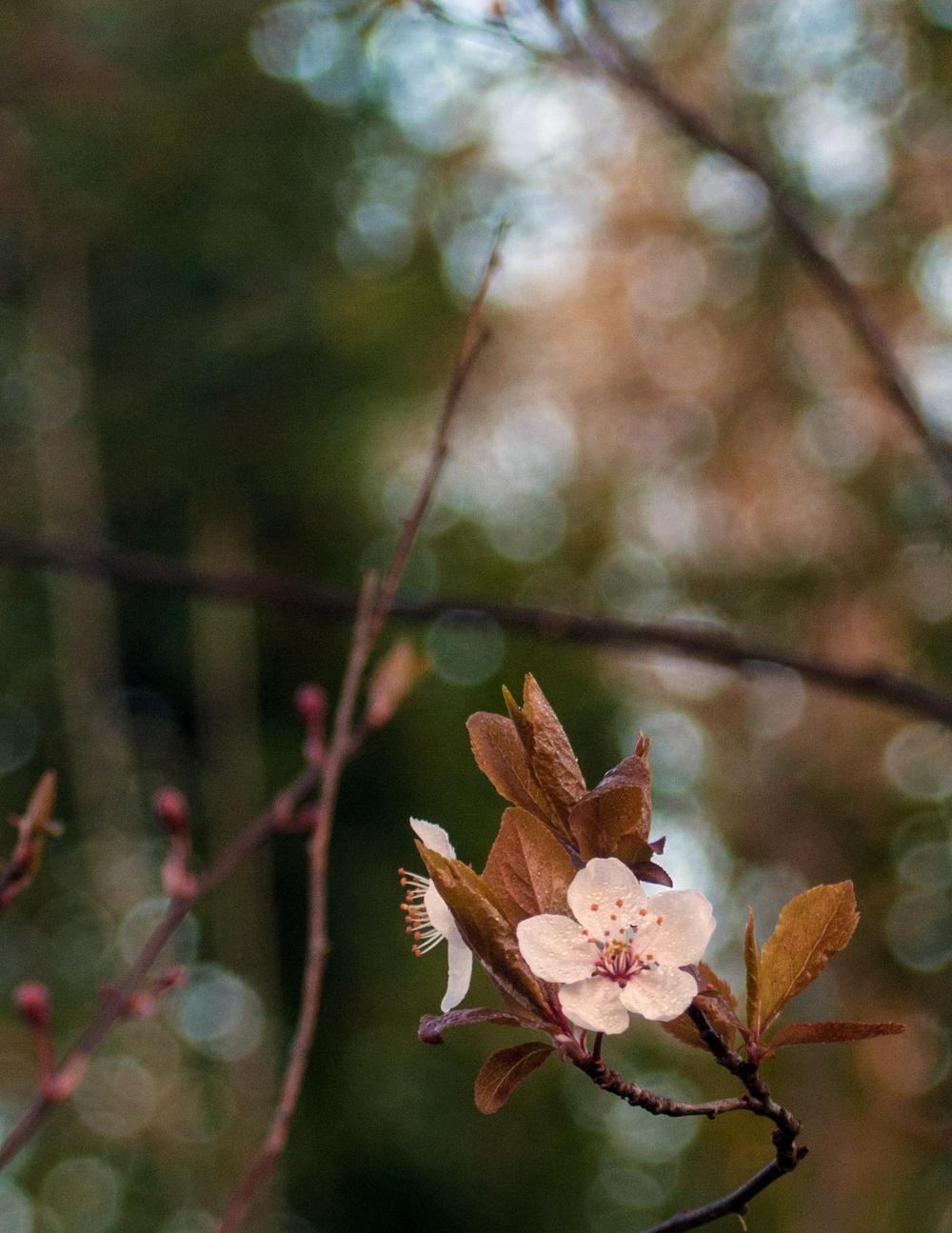 Signs of Spring 1.jpg