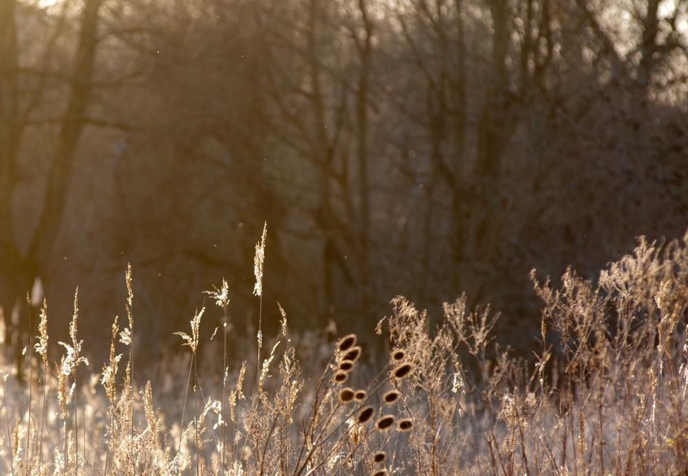 Heart of Reeds in January 2015 to tweet.jpg