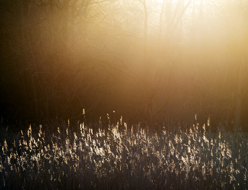 Sun coming through trees in heart of reeds.jpg