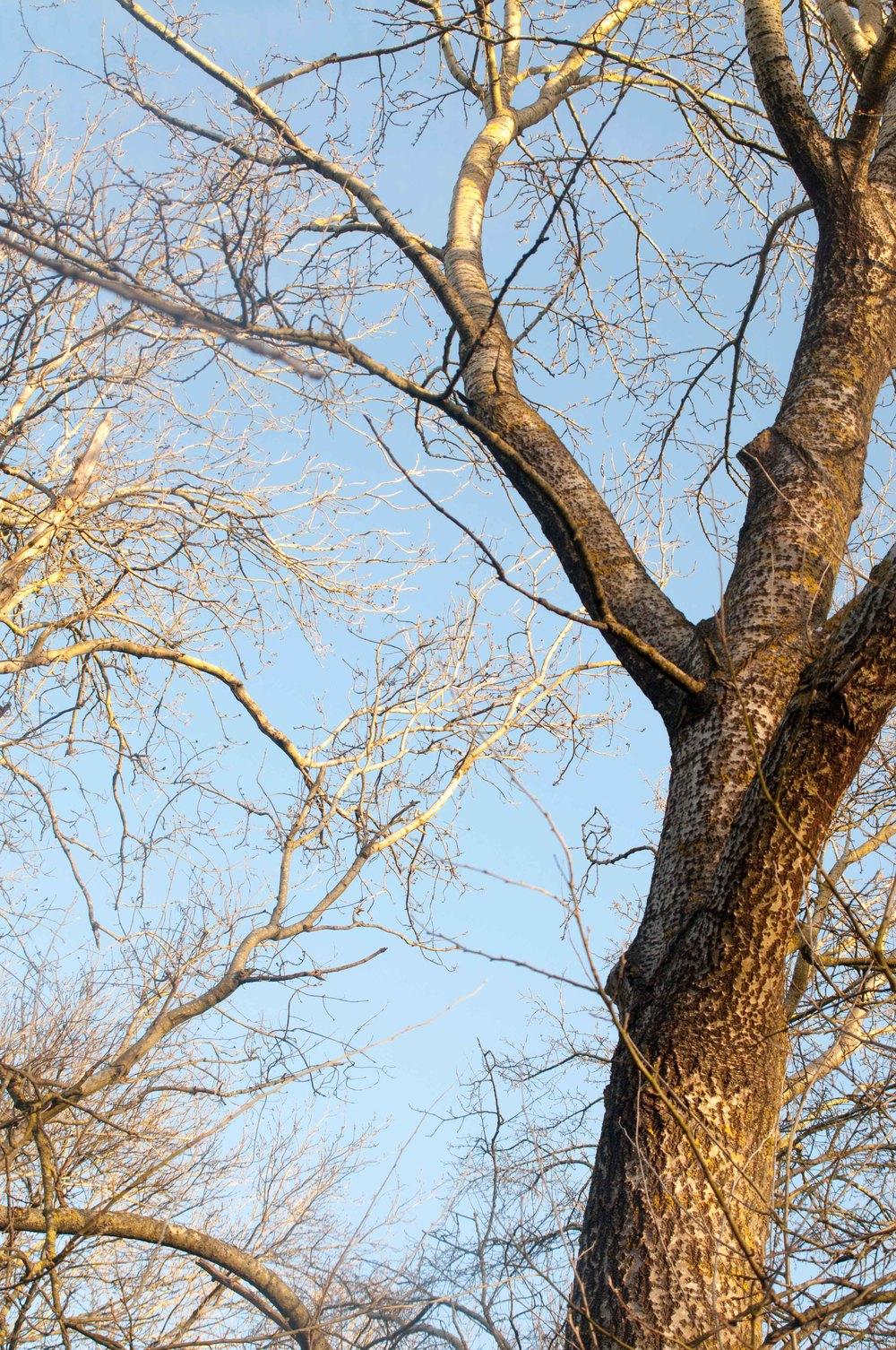 Bare Winter Tree in Lewes Railwayland by Katie Vandyck.jpg