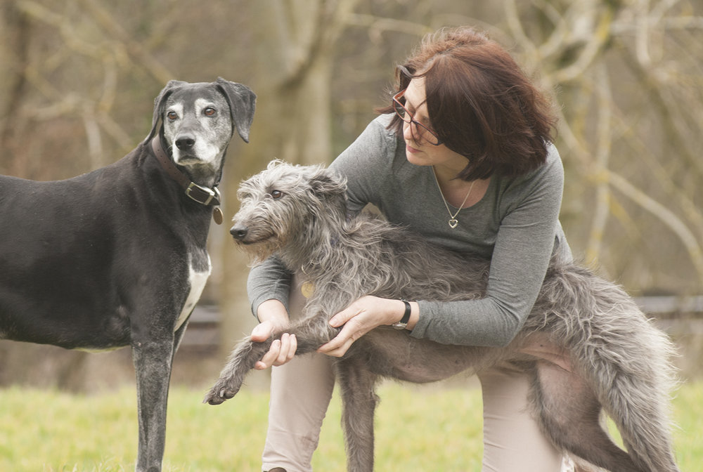 Mandy Fischer Canine Osteopath with lurcher.jpg
