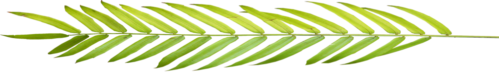 palm_leaf_full_03.png