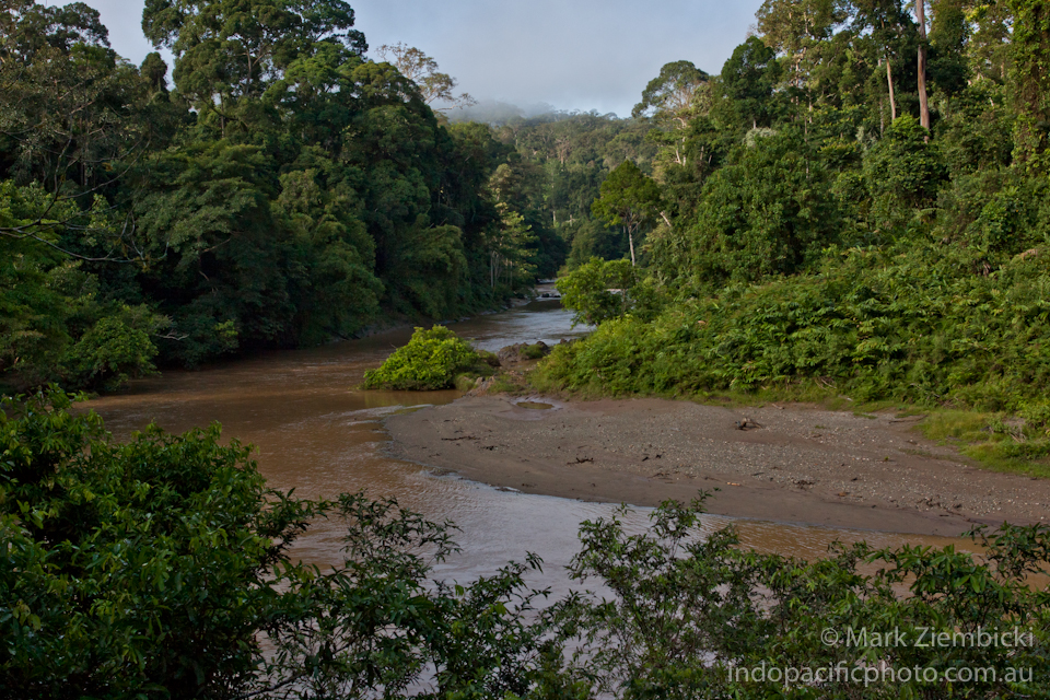 Borneo_960pix_IP-14.jpg
