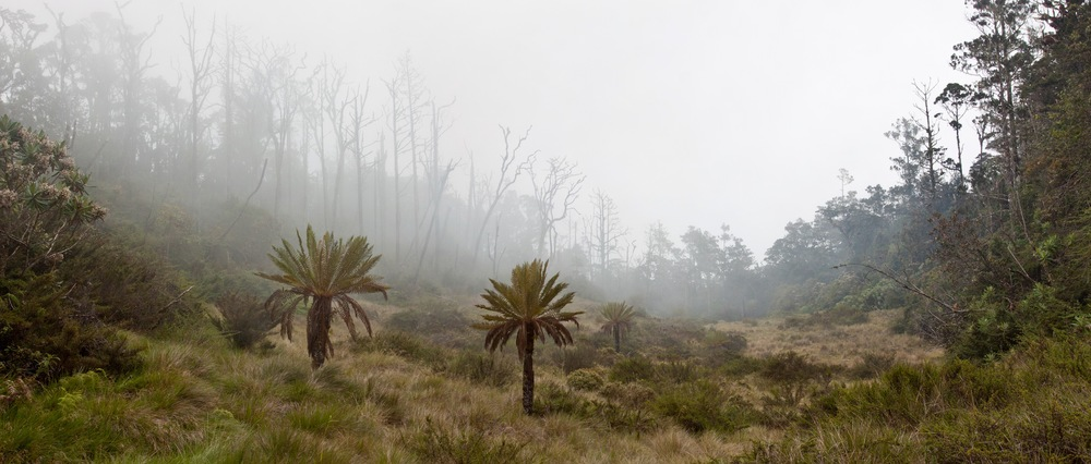 15_YUS grassland-1.jpg