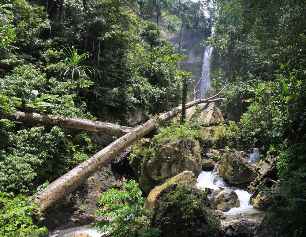 YUS forest.jpg
