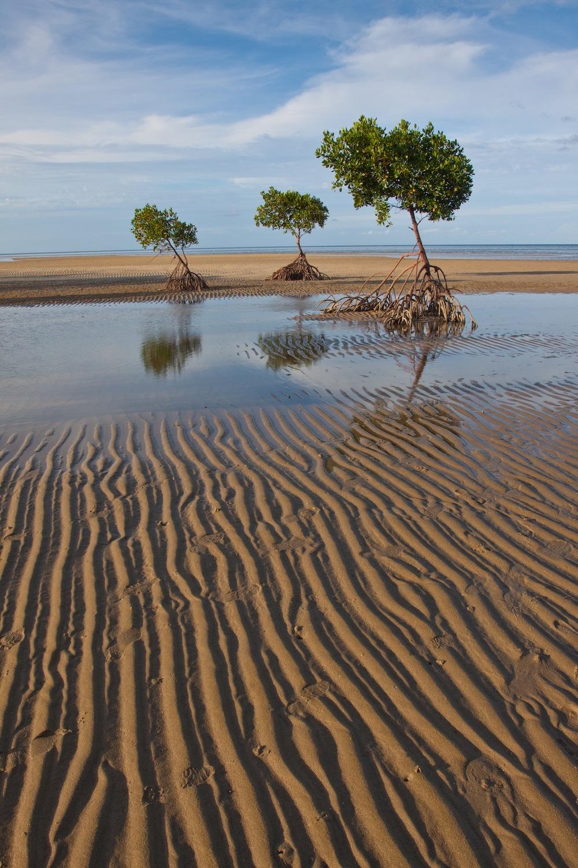 Mangroves FNQ.jpg