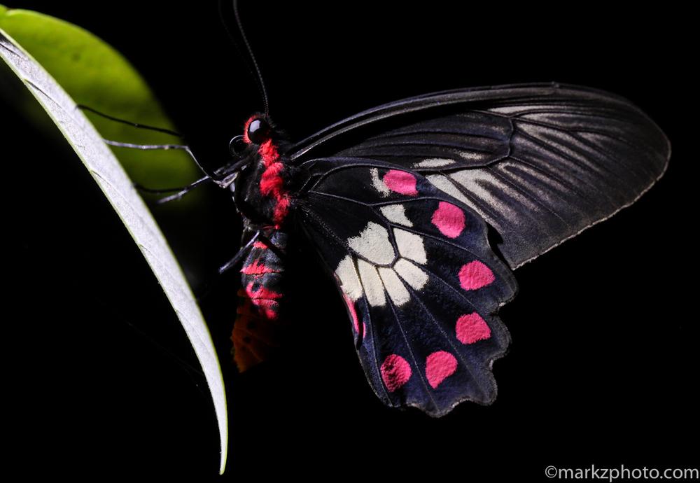 FNQ wildlife-3770-2.jpg