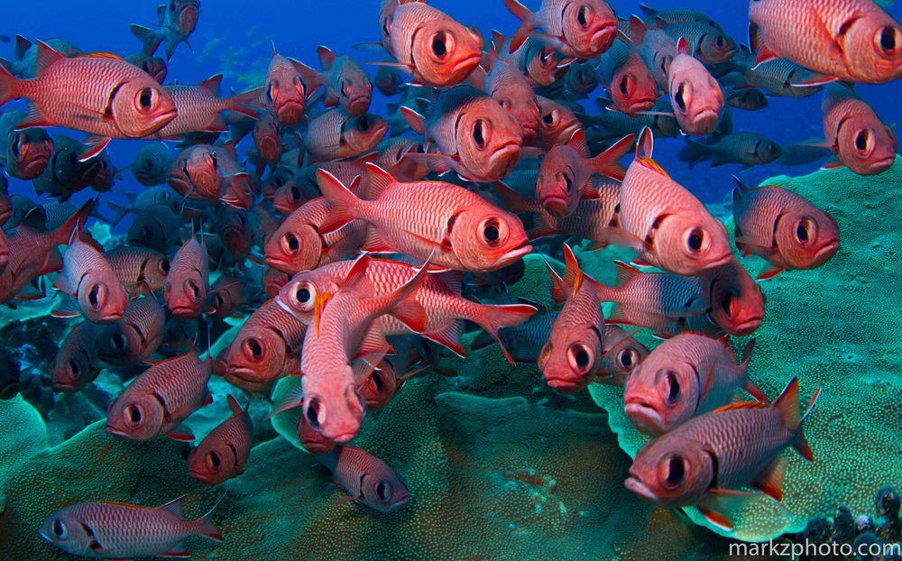 Palau_sm-0497.jpg