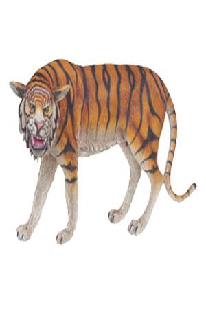 Life size 3D Tiger