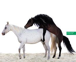 Benetton horses poster