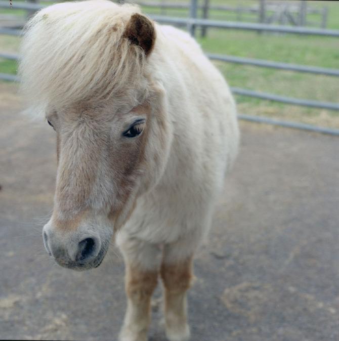 horses002.jpg