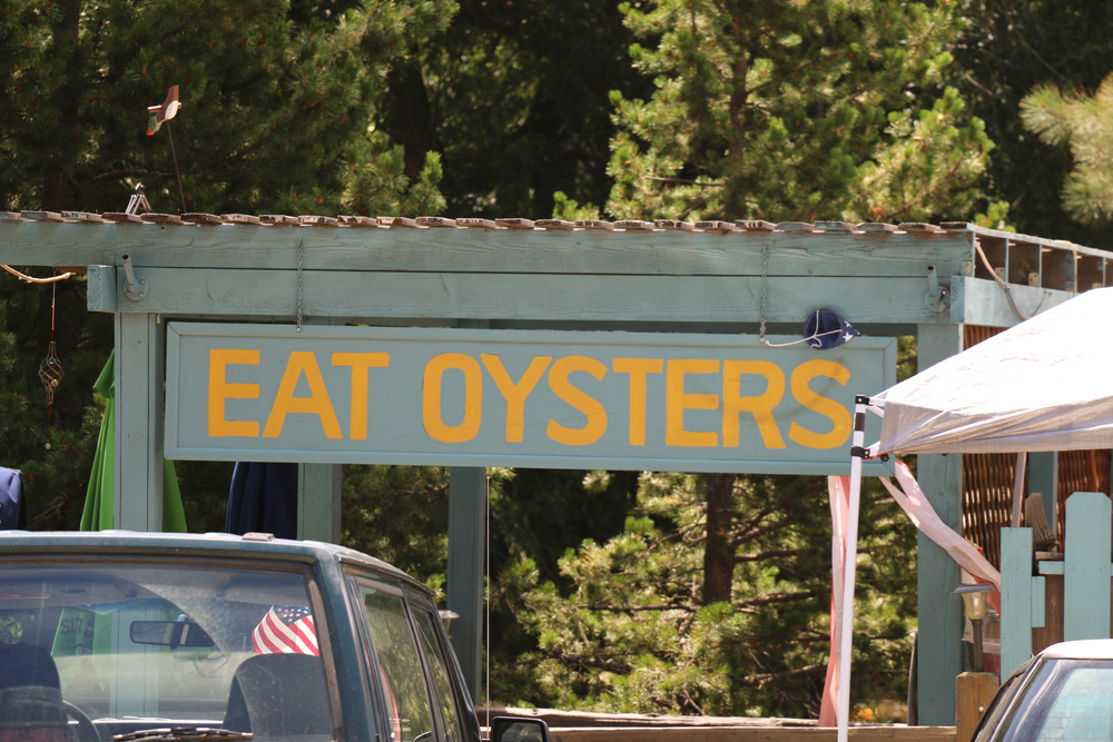 We're in the Rocky Mountains. What kind of Oysters?